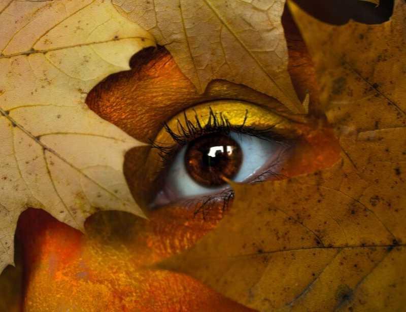 foto-oog-herfstbladeren